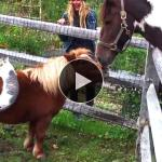 Cute And Funny Horse Videos Compilation Little Pony In Real Life Soo Cute