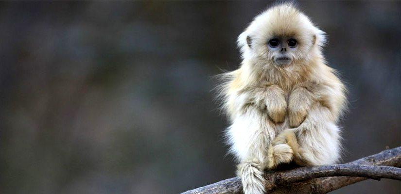 Weird Monkey Facts For Kids