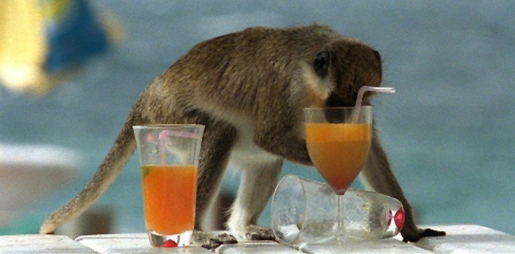 5 Animals That Get Drunk in the Wild