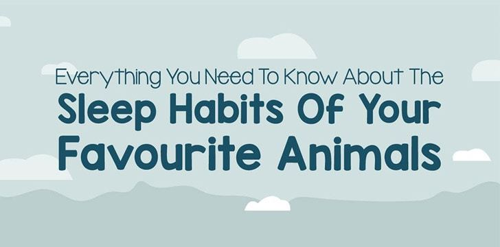 The Sleep Habits of Your Favorite Animals [Infographic]