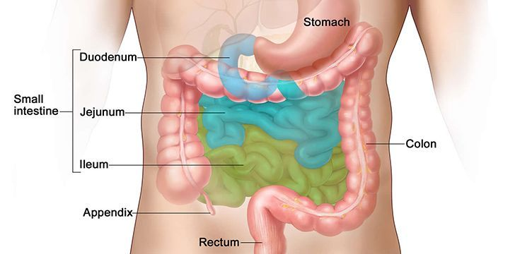 What Is The Appendix? | The Fact Site