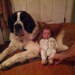 Awww! Babys! Mit Hunden!