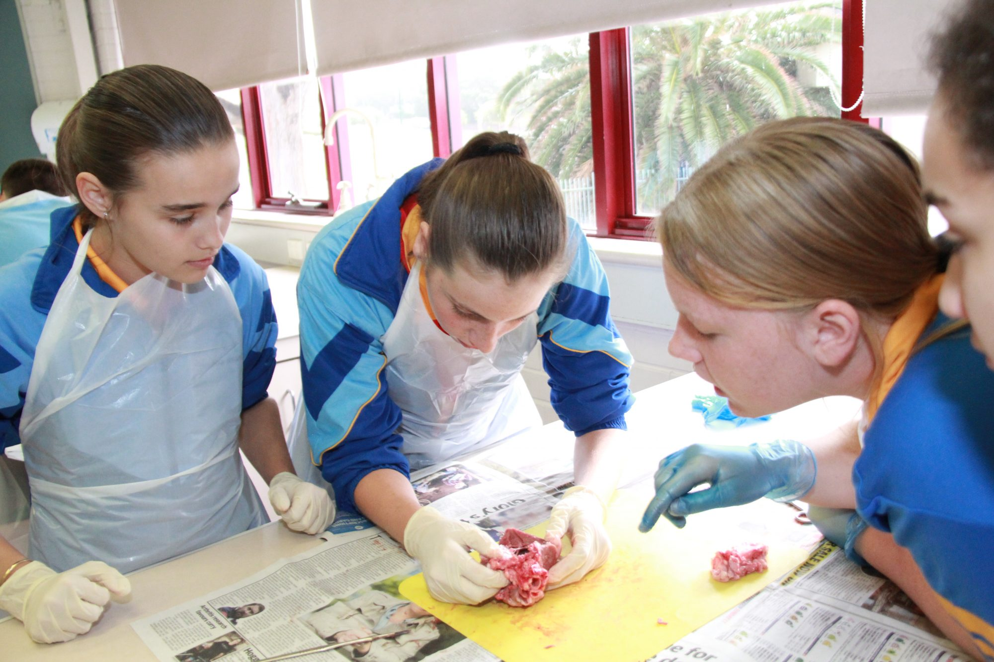 Year 8 Science Heart Dissection