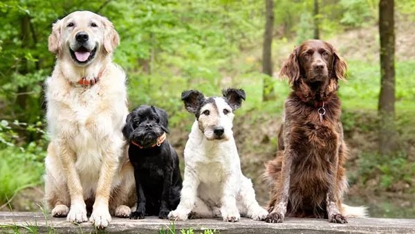 Four dogs of different breeds and sizes pose for a photo in front of greenery.