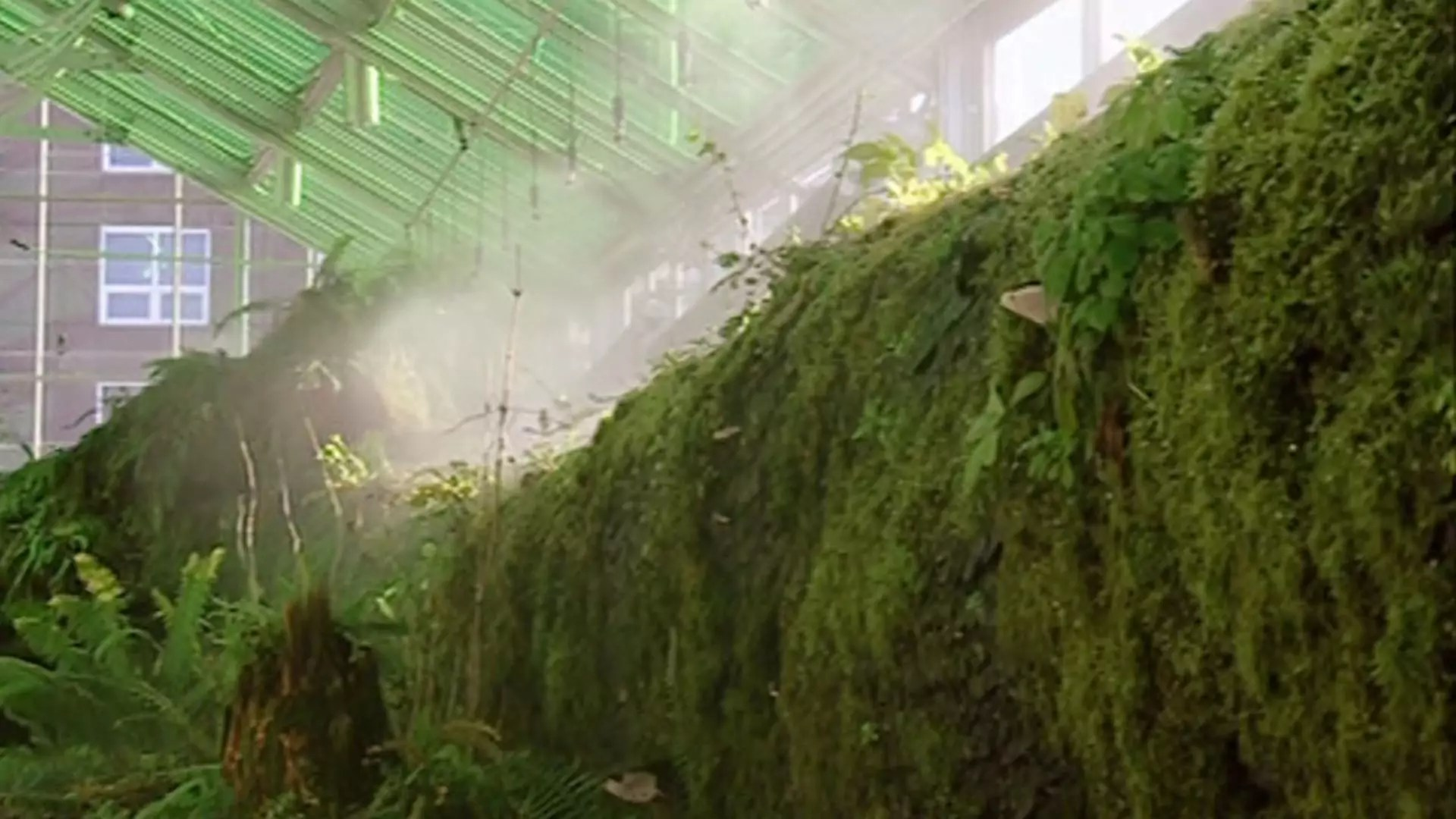 A group of moss and other greenery in a greenhouse.