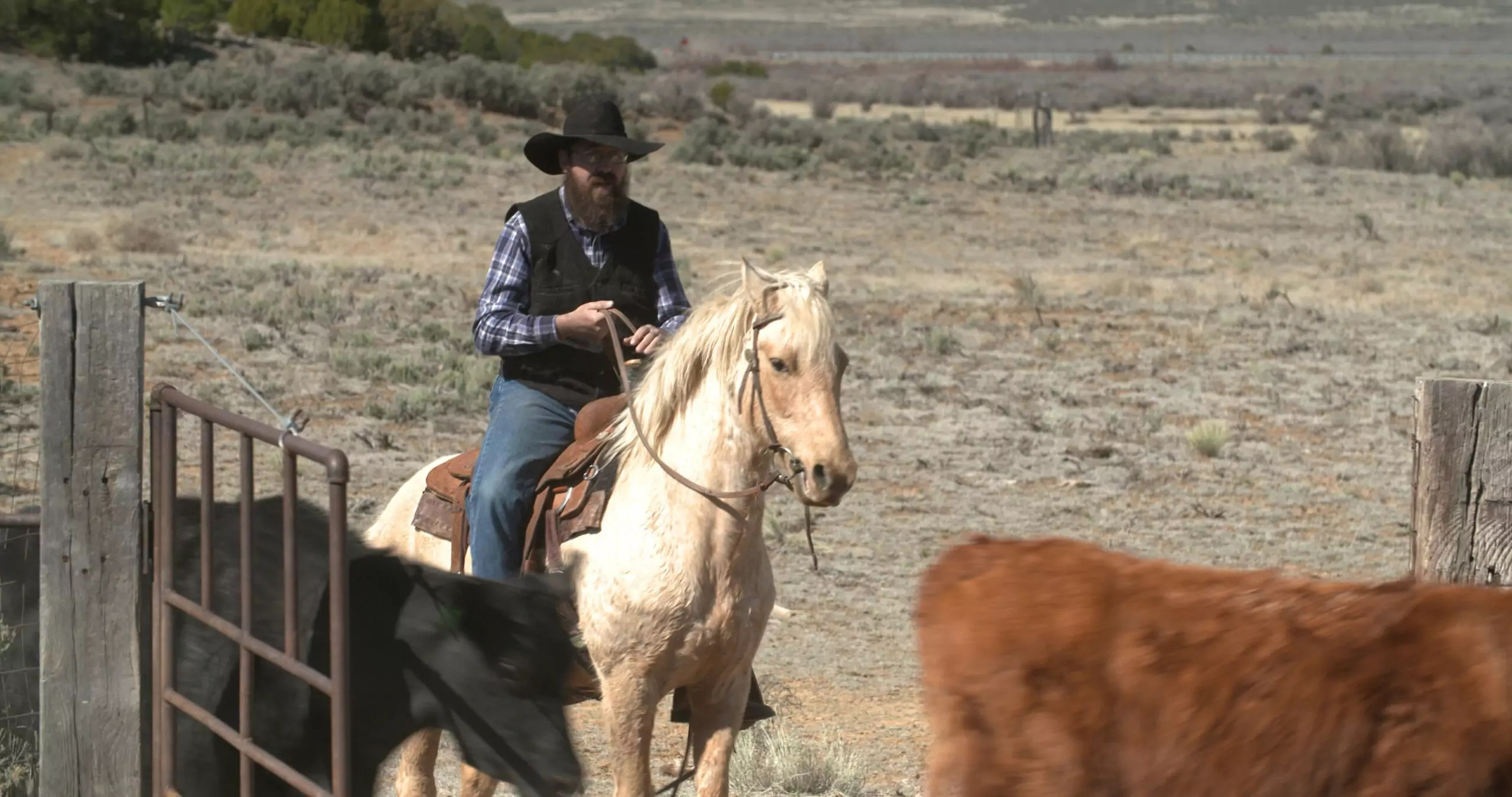 A man sitting on horseback near cattle.