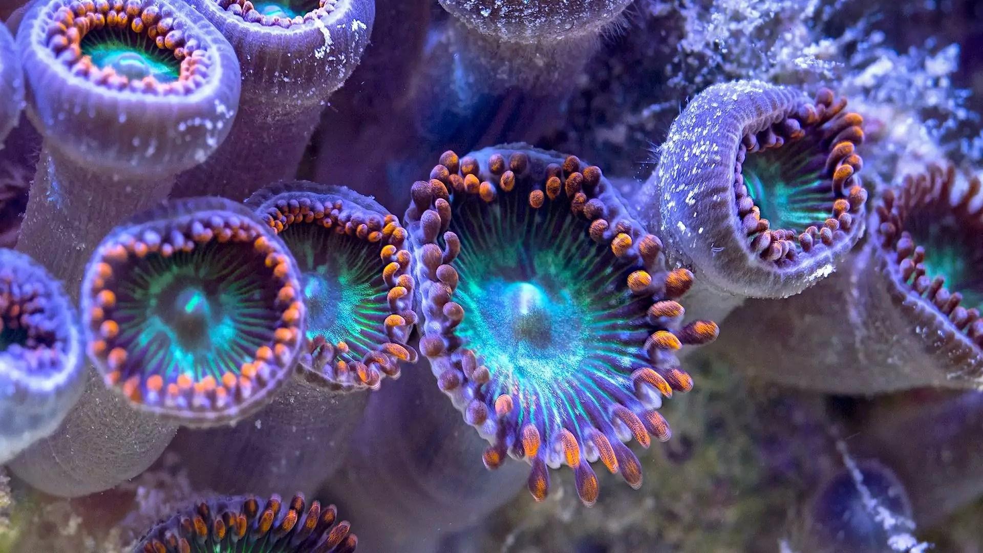 Underwater reefs greet the camera.