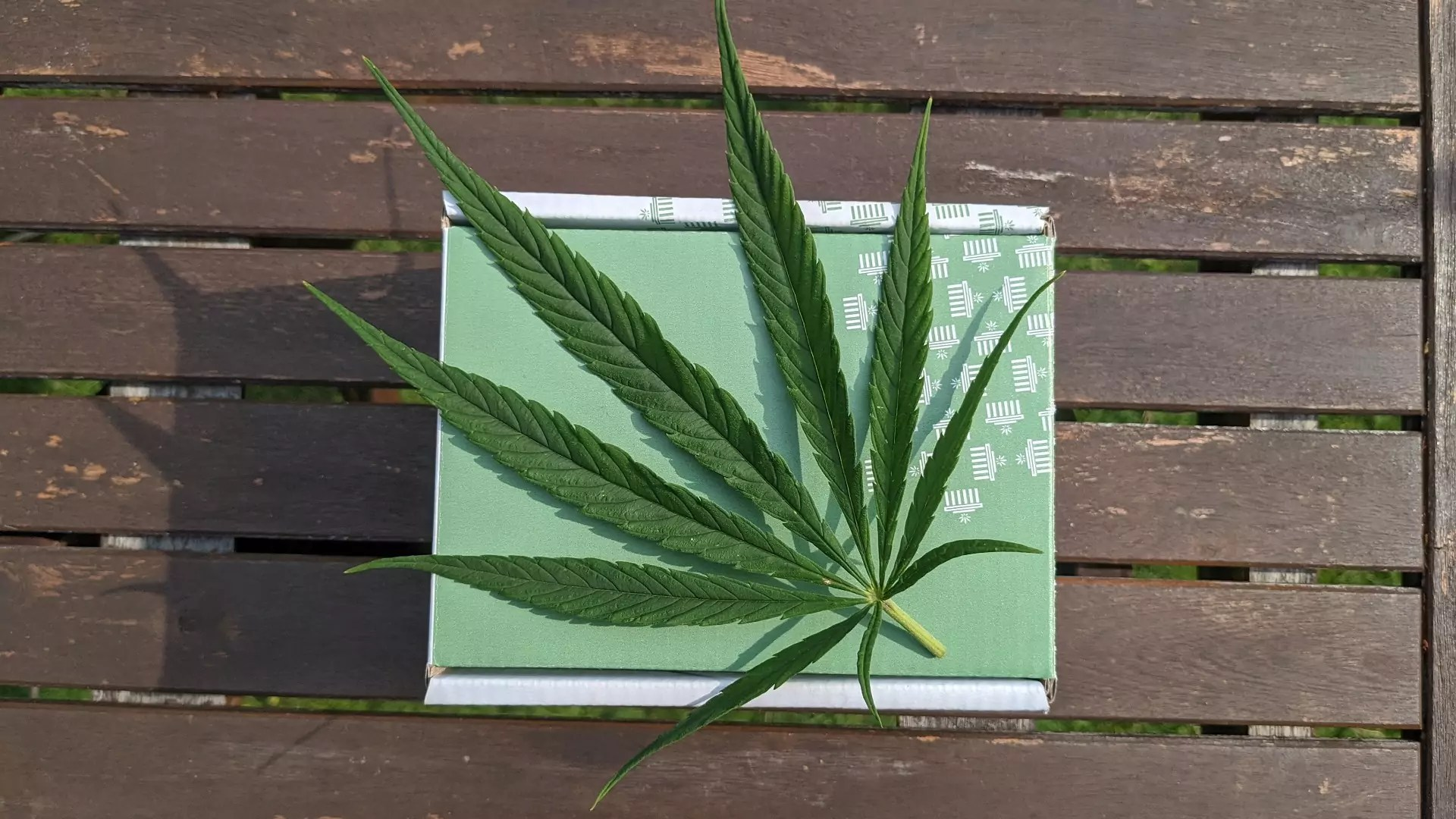 A Cannabis plant sitting on stop of a cardboard box on top of a bench