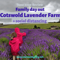 Visiting Cotswold Lavender  and social distancing - June 2020 Review