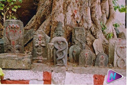 nagaraja-king-of-snakes-hinduism