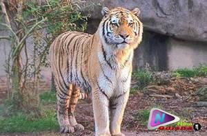 Similipal National Park of Odisha