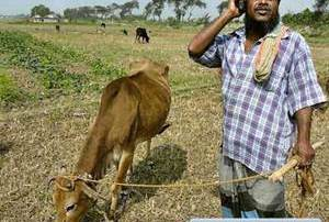 Farmers will get Free Mobile Phones in Digital Bazar Scheme in Odisha