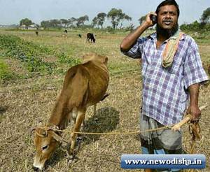 farmer with mobile