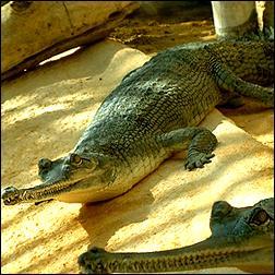 Tikarpada Wildlife Sanctuary of Odisha