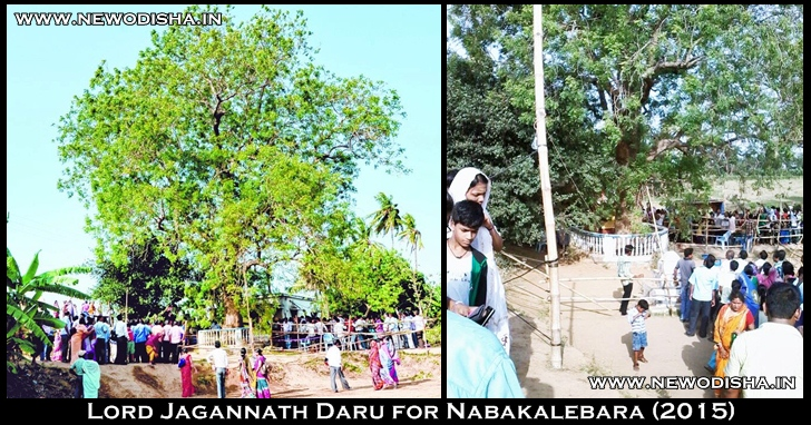 Lord Jagannath Daru for Nabakalebara 2015