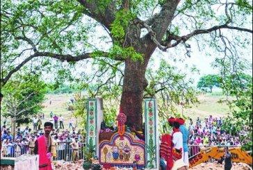 Sudarshan Daru Identified near Balakati in Khurda for Nabakalebara 2015