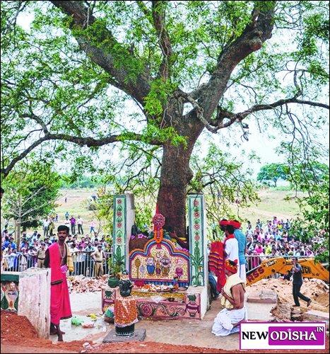 Sudarshan Daru for Nabakalebara 2015