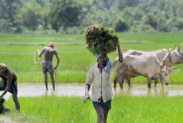Harvesting of Crops allowed with Social Distancing: Odisha Govt