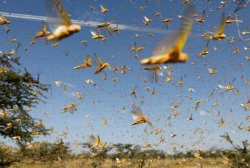 Locust attack likely in Odisha, six other states in July: UN body
