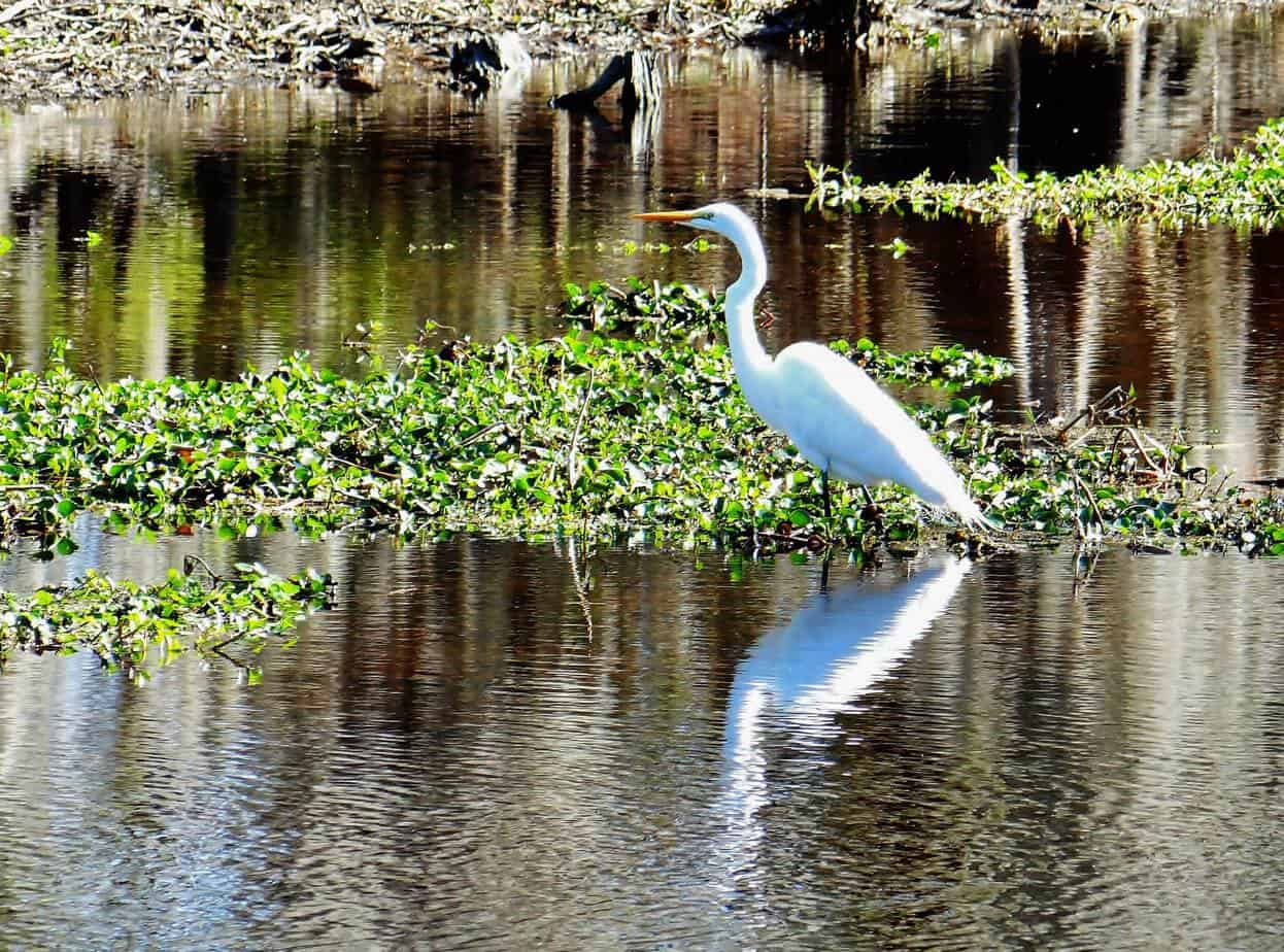 Best Airboat Tours New Orleans