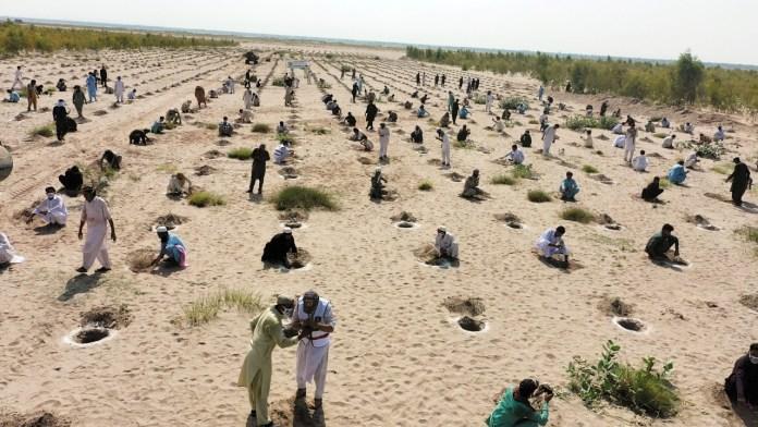 Tree plantation under billion tree tsunami campaign  in Pakistan