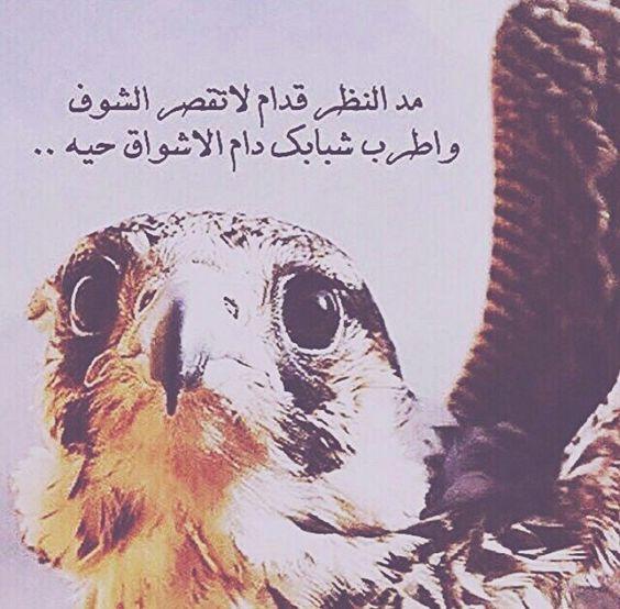 أشعار بدويه مصورة قصيرة مكتوبة اجمل أشعار وقصائد بدوية فوتوجرافر