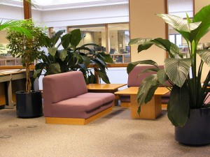 Casual Setting 300x225 25 Beautiful Indoor Plant Design Images
