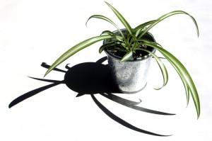 Crisp White 300x199 25 Beautiful Indoor Plant Design Images