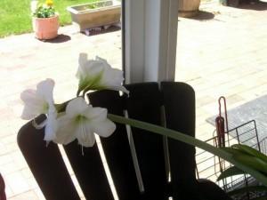 White Flower Indoor 300x225 25 Beautiful Indoor Plant Design Images