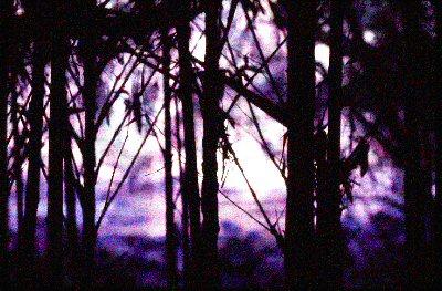 purplehaze.jpg