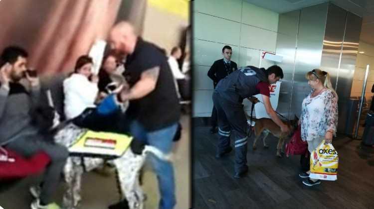 Собаки стали частью кризиса отношений Турции с Австрией