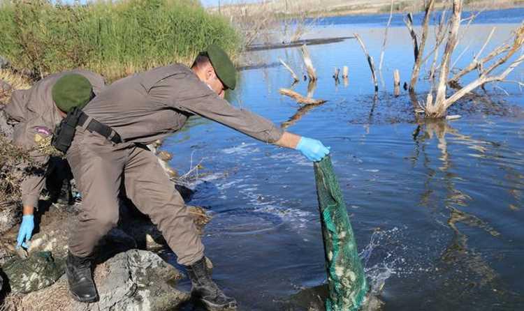 Жандармерия спасла 7500 лягушек от съедения