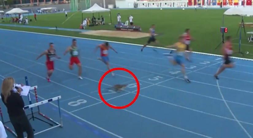 Стамбульский кот завоевал «бронзу» в забеге атлетов