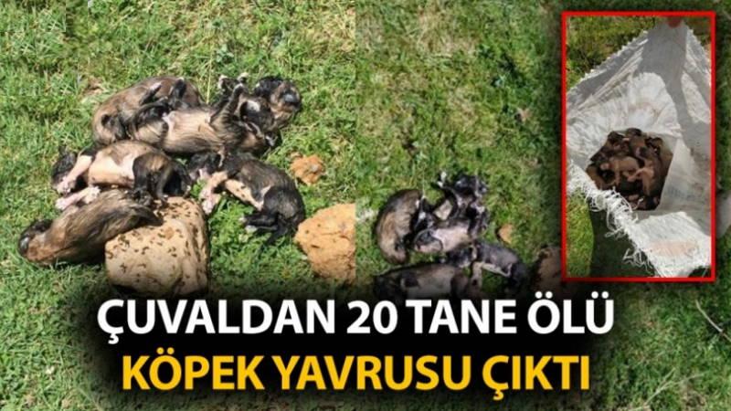 Жандармерия разыскивает убийцу 20 щенят