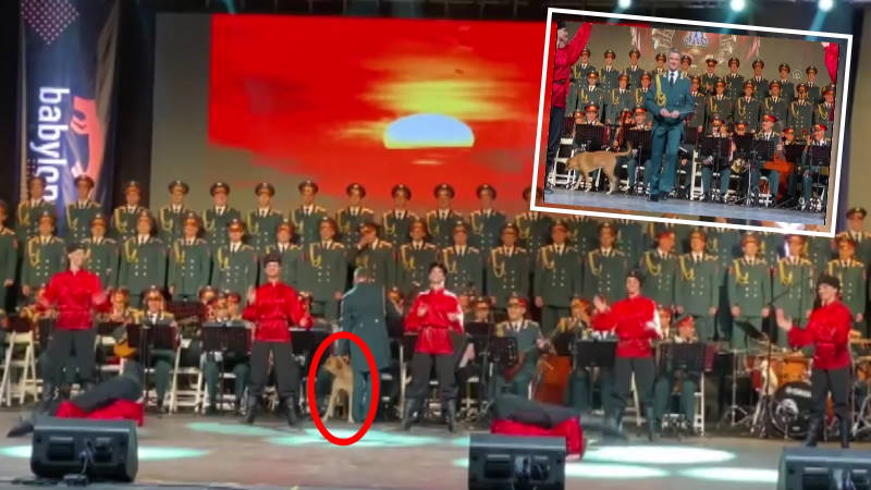 Измирскому псу понравилось выступление казаков с саблями