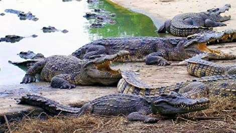 Cyprus-crocodile-park