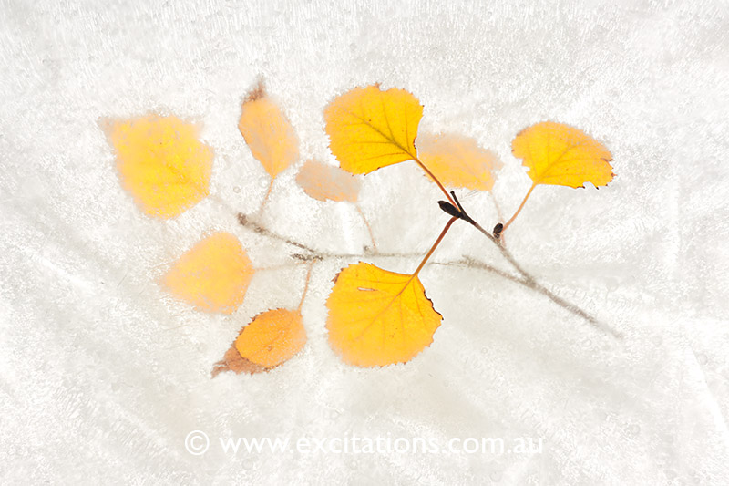 Art image of leaves frozen in ice. Fine art photography by excitations Mildura photographers