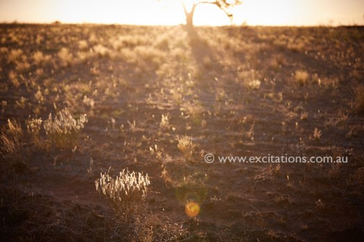 Semi arid Australian landscape. Creative image with sun flare and dry grass Photos from a photography workshop by excitations, outback NSW.