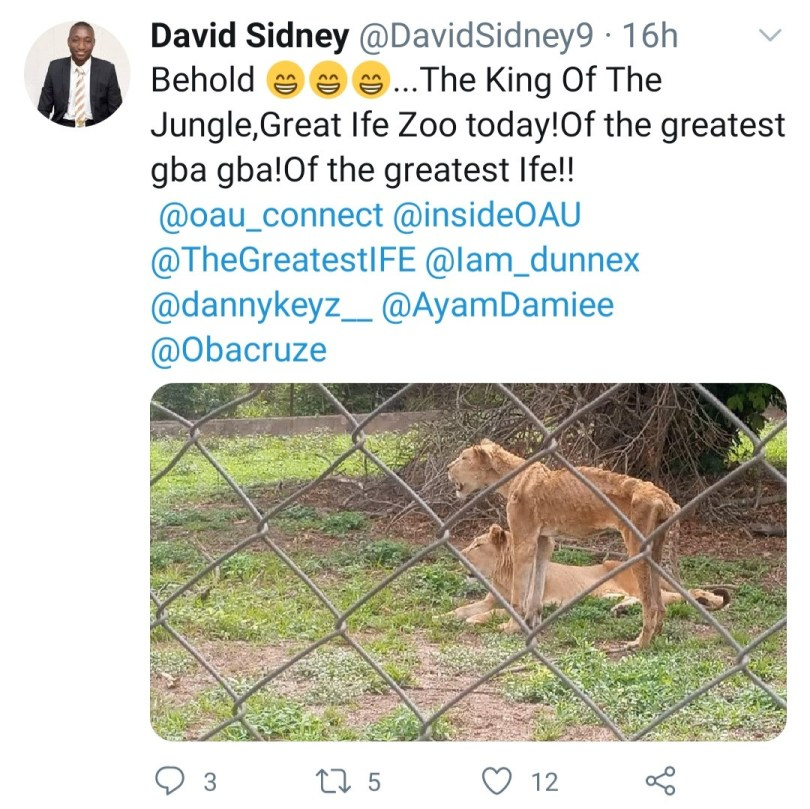 Photos of lions in OAU and UI zoos raise concerns