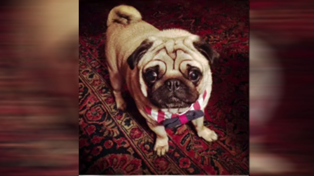 Dog dies during grooming appointment at Petco