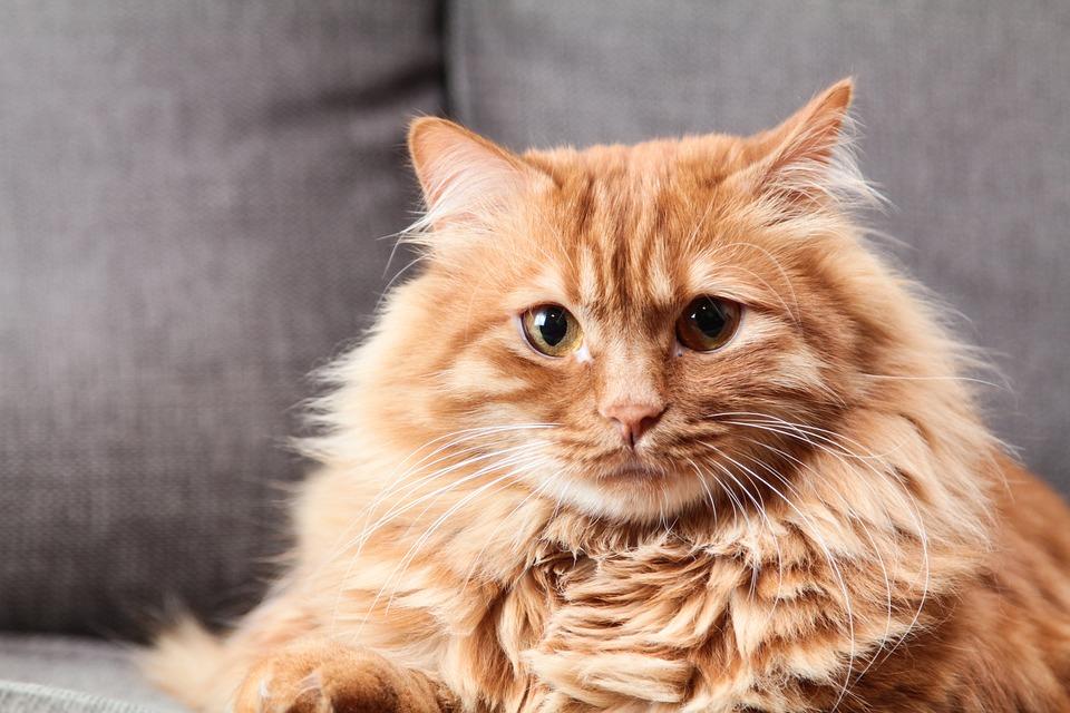 cats_687245