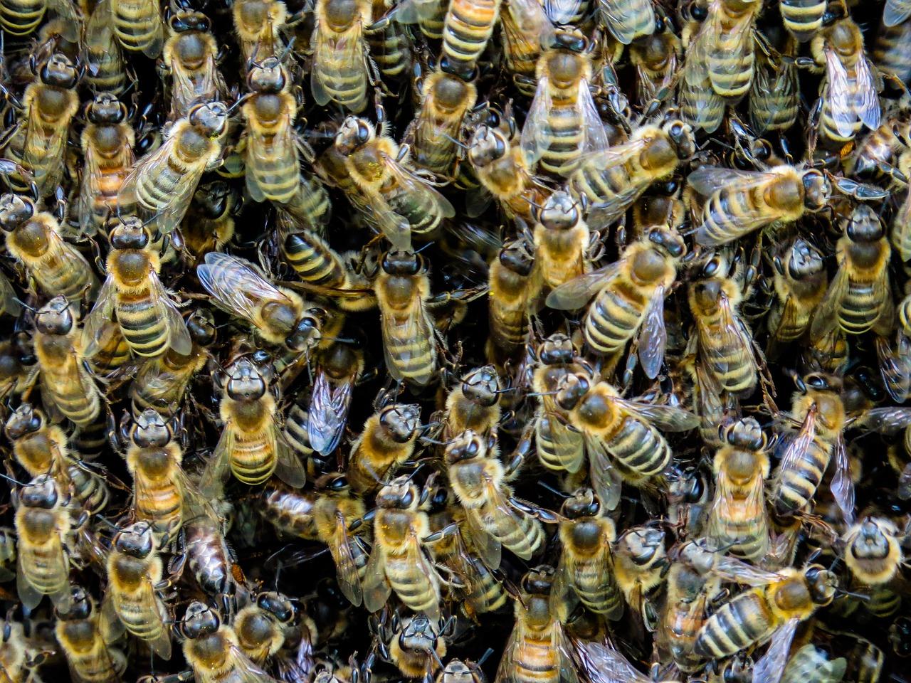 bees pixabay_1554776139910.jpg.jpg