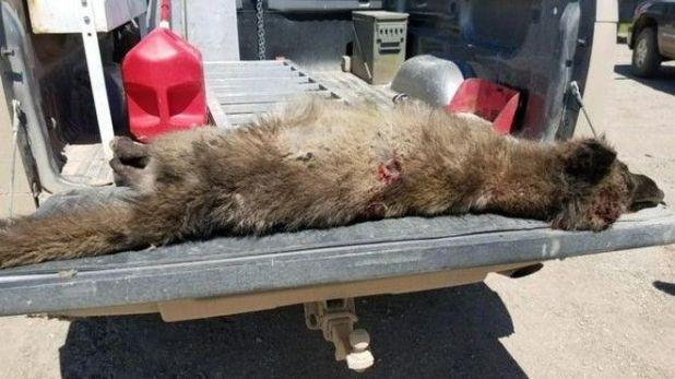 Σκότωσαν μυστηριώδες πλάσμα στις ΗΠΑ