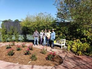 Darlington's Rose Garden replanted