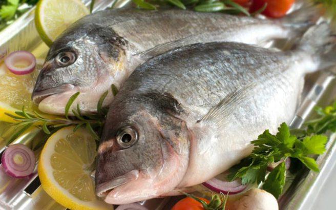 Αποτέλεσμα εικόνας για ψάρι