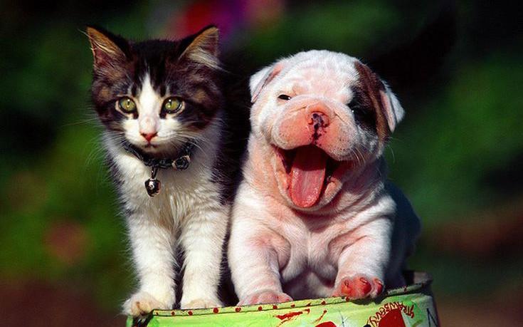 Animal-Lovers-Scholarships