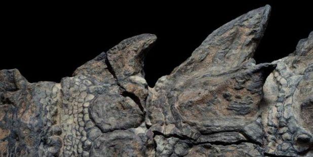 νοντόσαυρος Καναδάς δεινόσαυρος Απολίθωμα National Geographic
