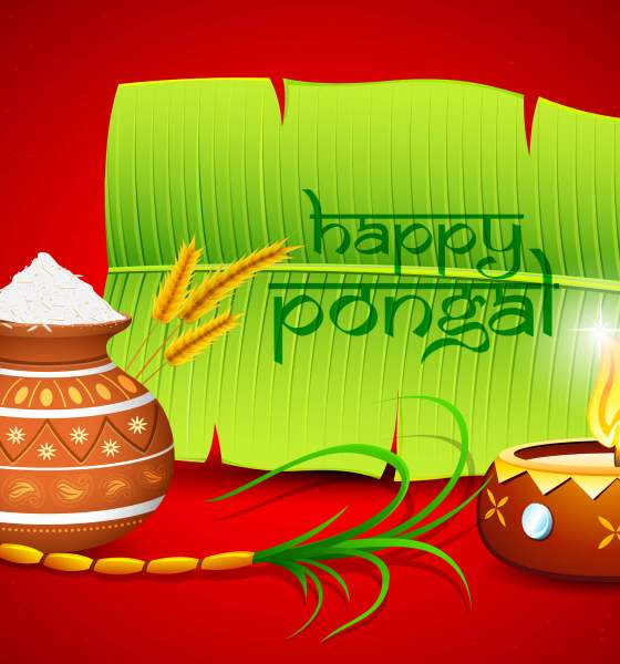Happy Pongal Festival