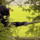 Gorilla Tamilrockers