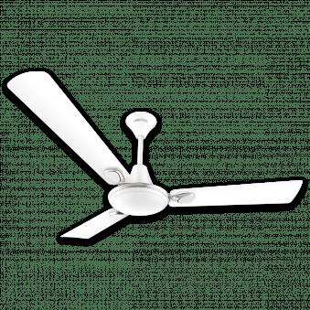 Decor Fans 1